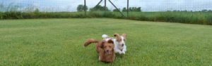 Dogs running in large field
