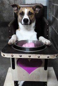 Dog feeding in chair