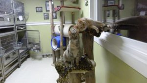 Cats on their perch