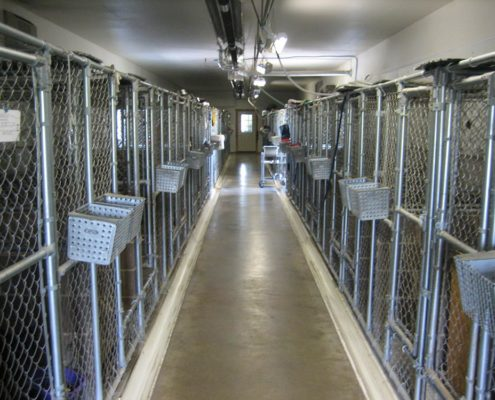 Row of kennels