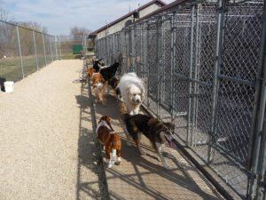 Dogs walking by kennels