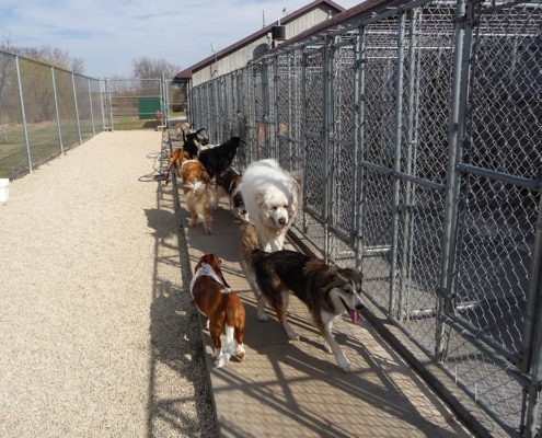 Dogs walking by kennels