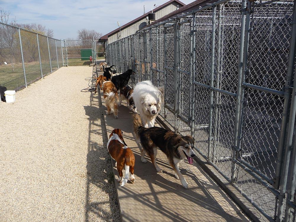 Dog Boarding Kennels In Evansville In