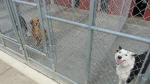 The kennel cages