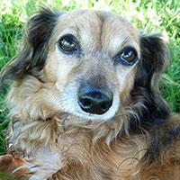 Shai's Dog