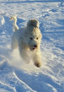 Nelly running in snow