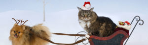 Cat and dog as reindeer and sleigh rider